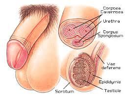 Penoplastie agrandissement Penis Turquie